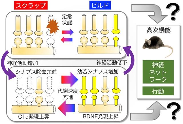 ponti_miyakawa