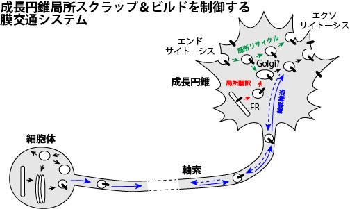 ponti_Tojima