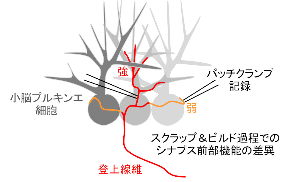 ponti_kawaguchi